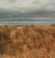 Tallgrass Prairie, photo by Sophia Dembling